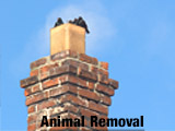 Animal Removal Birds, squirrels, and raccoons are drawn to a chimney's heat in winter. It's not safe for them, or you. We're pros at humane animal removal.